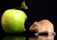 Apple_Mac_mouse_funny_wallpaper_pictures-thumb